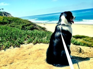 Buddy at Salt Creek Beach