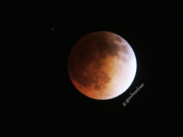 Los Altos Resident Gwen Goodman's shot of Blood Moon (April 2014)