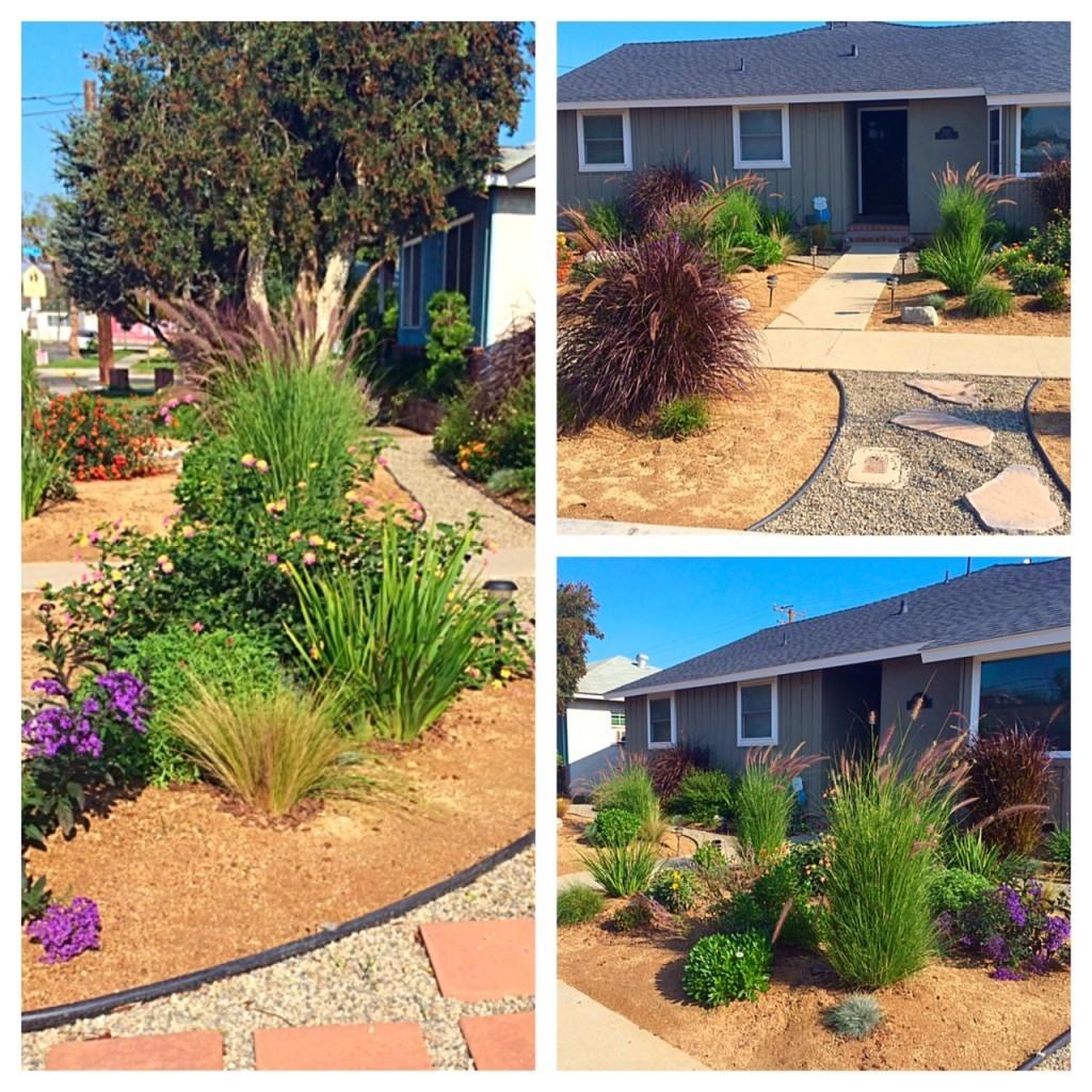 Well designed Drought Tolerant Yard in Los Altos