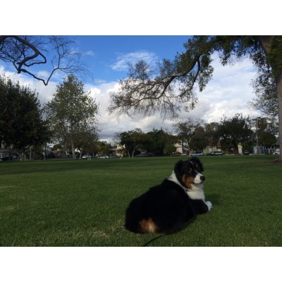 Buddy at Little Whaley Park